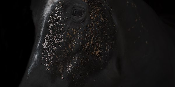 Ellie-BLog-Horse-Photography_BLOG-600x900
