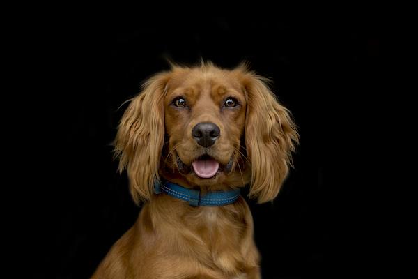 Otis Pet Portrait - Emma Lowe Pet Photography