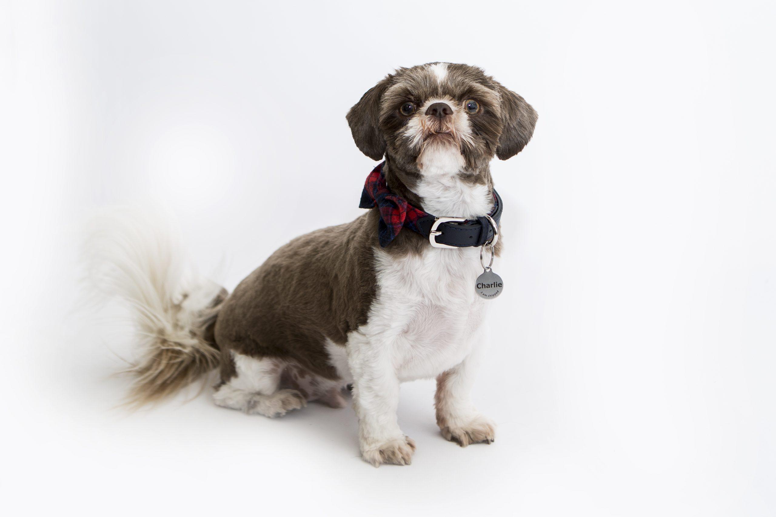 Emma Lowe Pet Photographer Portrait