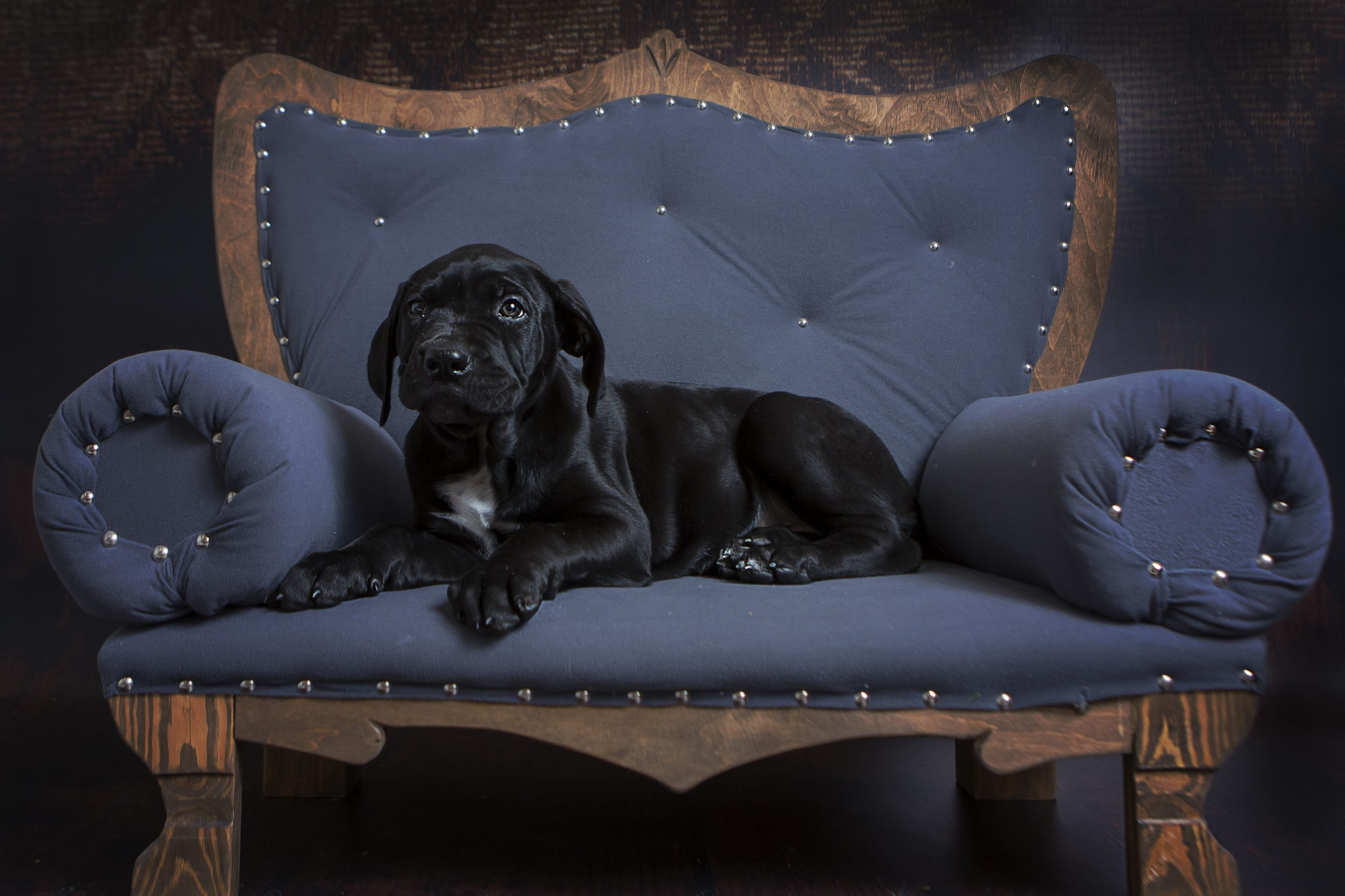 LUNA Pet Photographer in Rugby Emma Lowe